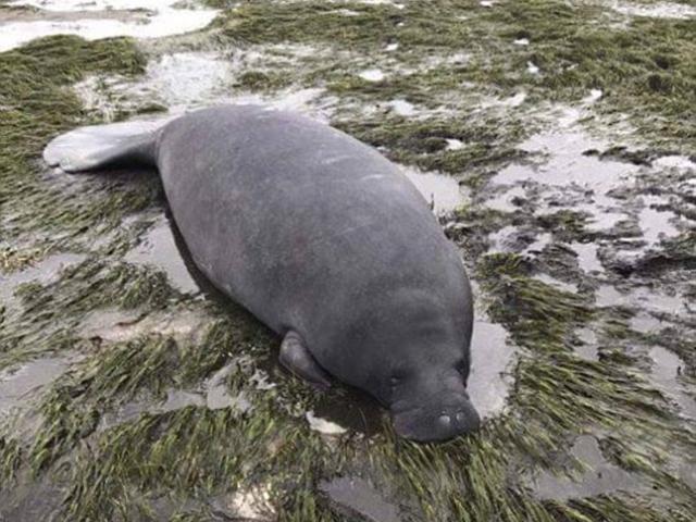Anh: Cuồng phong cuốn cá voi sát thủ vào đất liền 50m - 4