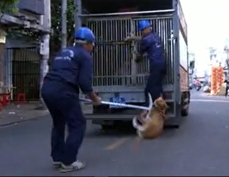TP.HCM: Săn bắt chó thả rông trên phố, nhiều nhân viên bị chủ nuôi hành hung - 1