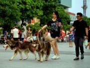 Tin tức trong ngày - Chó thả rông: Ai phạt, phạt ai?