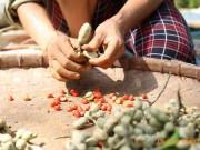 Thị trường - Tiêu dùng - Làm giàu ở nông thôn: Một cây dổi đổi cả...chỉ vàng