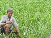 Thị trường - Tiêu dùng - Lạ mà hay: Trồng 10 công lan như cấy lúa, chỉ bán củ, thu nửa tỷ