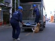 Tin tức trong ngày - TP.HCM: Săn bắt chó thả rông trên phố, nhiều nhân viên bị chủ nuôi hành hung