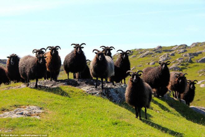 Lý do Scotland được bình chọn là quốc gia đẹp nhất thế giới - 11