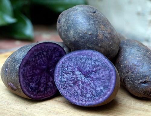 Vén màn bí mật màu sắc tím, đỏ, xanh, đen... của các loại khoai tây - 1