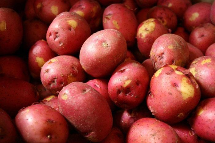 Vén màn bí mật màu sắc tím, đỏ, xanh, đen... của các loại khoai tây - 5