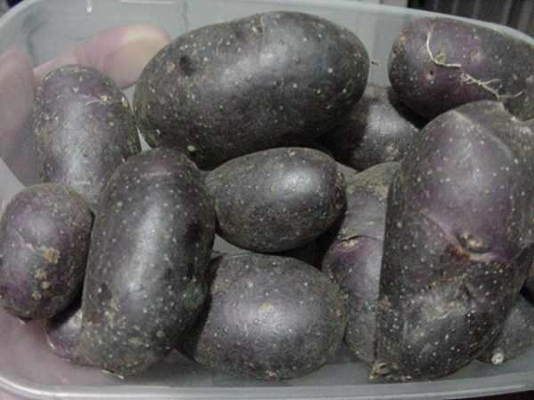 Vén màn bí mật màu sắc tím, đỏ, xanh, đen... của các loại khoai tây - 8
