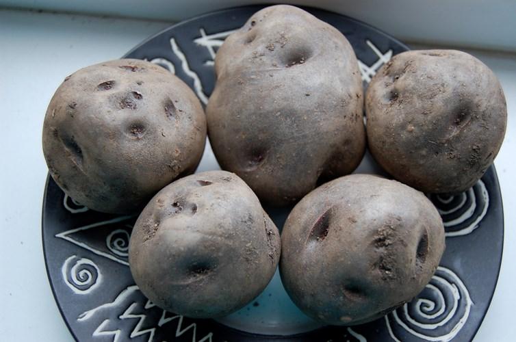 Vén màn bí mật màu sắc tím, đỏ, xanh, đen... của các loại khoai tây - 9