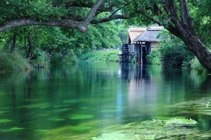 Có một ngôi làng xanh mát, trong lành và bình yên đến lạ ở Nhật Bản - ảnh 9