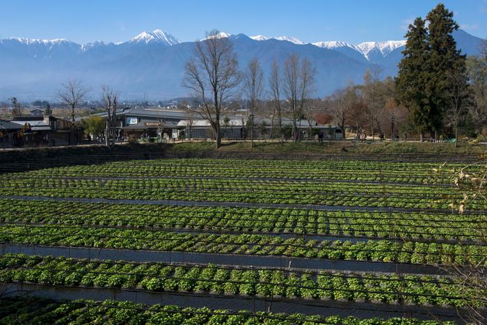 Có một ngôi làng xanh mát, trong lành và bình yên đến lạ ở Nhật Bản - ảnh 7