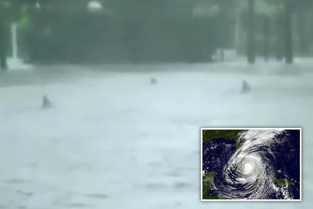 """Mỹ: Đàn cá mập bơi lội trên phố sau siêu bão """"quái vật""""? - ảnh 1"""