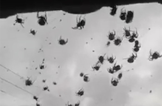 Mở cửa nhà, choáng váng thấy hàng triệu con nhện bay trước mặt - ảnh 1