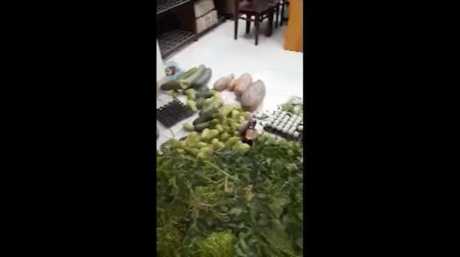Clip: Dân bắt quả tang rau củ thối suýt bị tuồn vào trường tiểu học