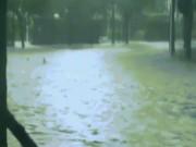Mỹ: Đàn cá mập bơi lội trên phố sau siêu bão  quái vật ?