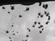 Phi thường - kỳ quặc - Mở cửa nhà, choáng váng thấy hàng triệu con nhện trước mặt
