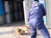 Tin tức trong ngày - Bắt chó thả rông: Ai có quyền đốt chó?