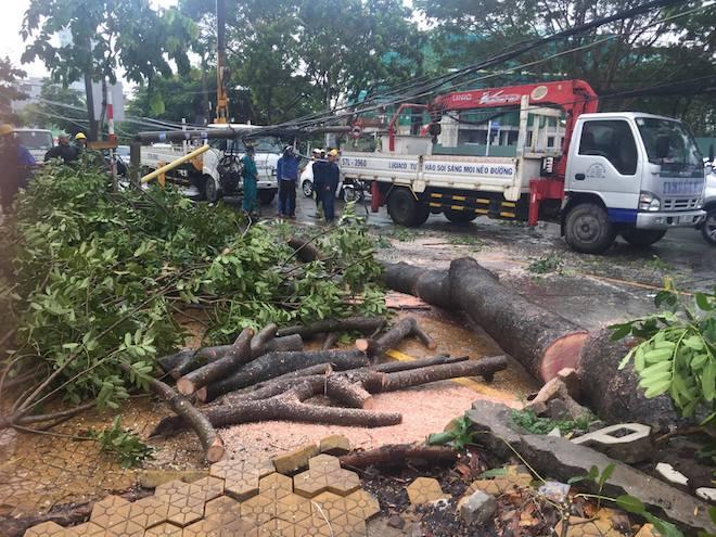 Bão số 10 bất ngờ gây mưa lớn, cây đổ, đường ngập ở TP.HCM - ảnh 2