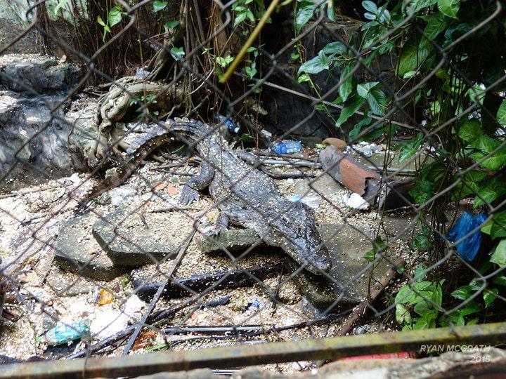 Du khách nước ngoài đổ xô khám phá công viên nước bỏ hoang ở Việt Nam - 7
