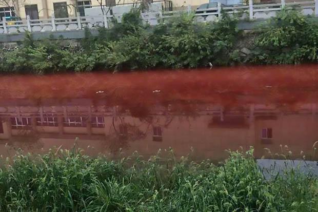 Dòng sông bất ngờ nhuộm đỏ máu tại thành phố Trung Quốc - ảnh 3