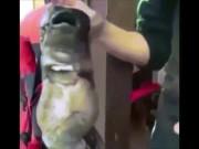 """Phi thường - kỳ quặc - Video: Cá """"quái vật"""" 2 mồm kỳ dị cắn câu ngư dân Nga"""