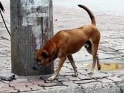 Tin tức trong ngày - Đã có 56 người tử vong do chó dại cắn