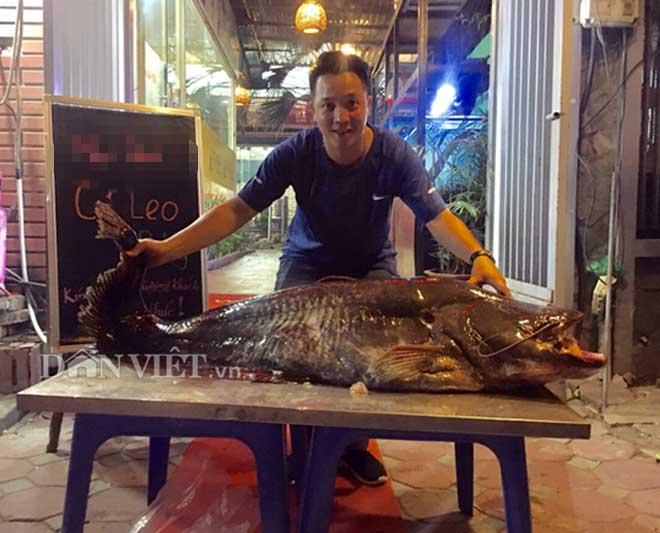 """Cá leo """"khủng"""" nặng 52kg, dài bằng người lớn tiền triệu/kg ở Thủ đô - 1"""