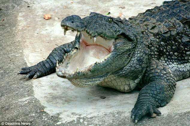 Srilanka: Nhà báo Tây rửa tay bị cá sấu kéo xuống ăn thịt - 3