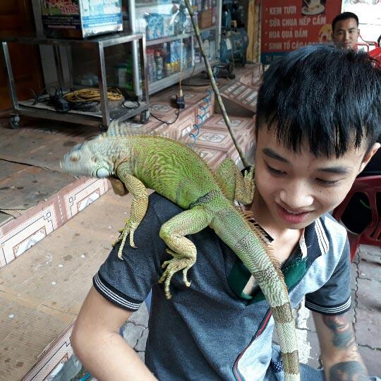 Hot boy 9X Yên Bái chơi thú cưng rồng Nam Mỹ độc, lạ dài cả mét - ảnh 5