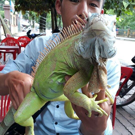 Hot boy 9X Yên Bái chơi thú cưng rồng Nam Mỹ độc, lạ dài cả mét - ảnh 6