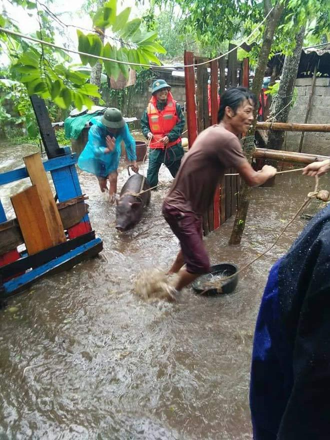 Nghệ An: Nước tràn đê, thủy điện xả lũ, di dời dân khẩn cấp - 4