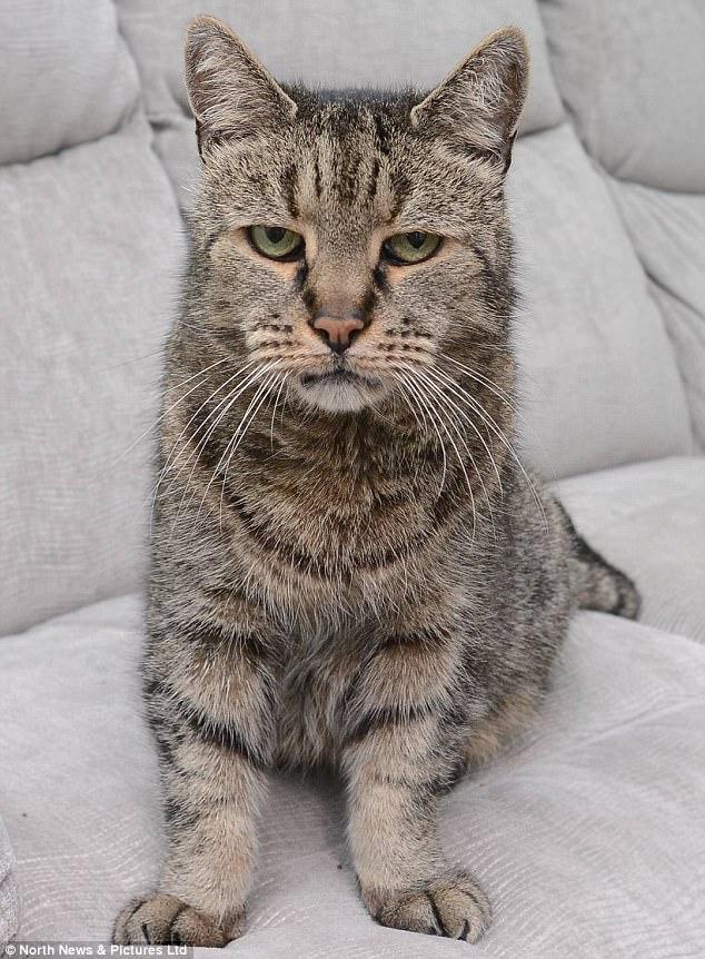 """Cụ mèo già nhất thế giới chết ở tuổi """"144"""" - ảnh 1"""