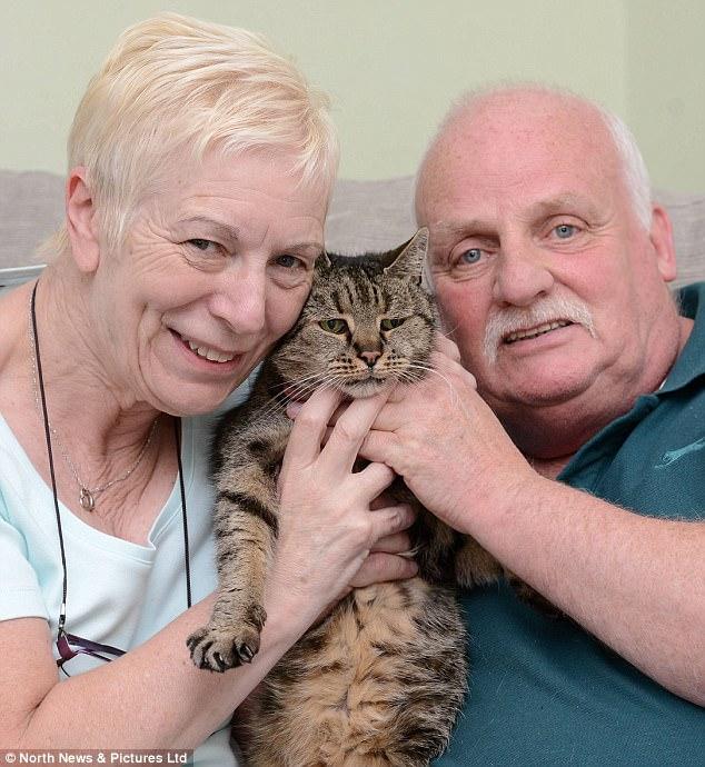 """Cụ mèo già nhất thế giới chết ở tuổi """"144"""" - ảnh 2"""