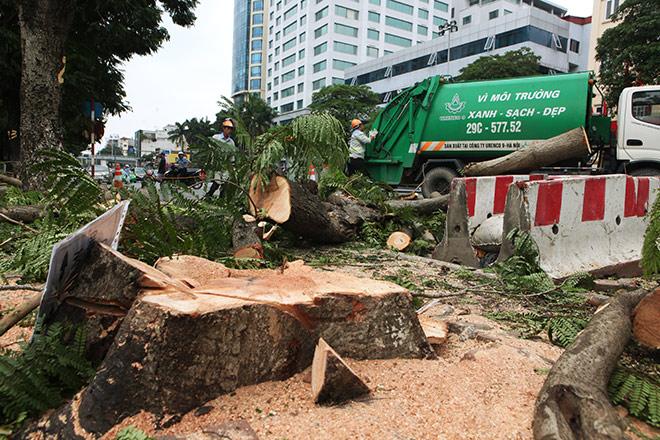 """Ảnh: Chặt hạ, di chuyển 130 """"cụ cây"""" trên đường Kim Mã - 3"""