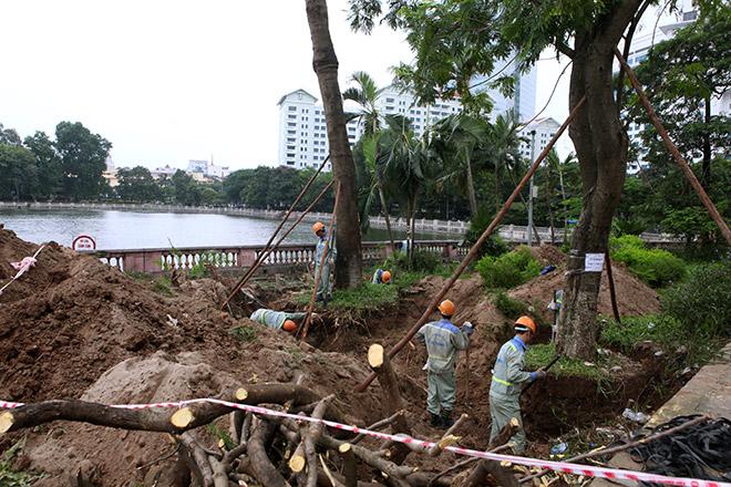 """Ảnh: Chặt hạ, di chuyển 130 """"cụ cây"""" trên đường Kim Mã - 6"""