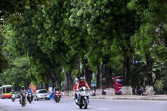 """Ảnh: Chặt hạ, di chuyển 130 """"cụ cây"""" trên đường Kim Mã - 9"""