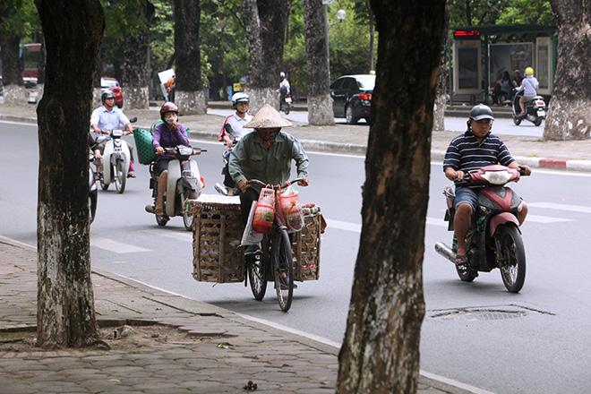 """Ảnh: Chặt hạ, di chuyển 130 """"cụ cây"""" trên đường Kim Mã - 11"""