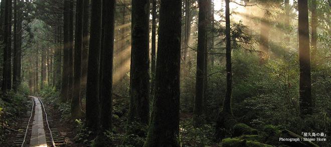 Phát hiện hang động hình trái tim ẩn mình trong khu rừng ngàn năm tuổi - ảnh 1