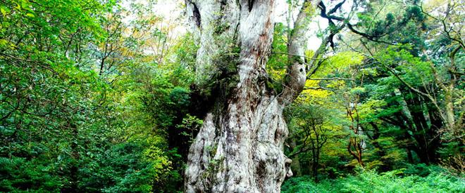 Phát hiện hang động hình trái tim ẩn mình trong khu rừng ngàn năm tuổi - ảnh 2