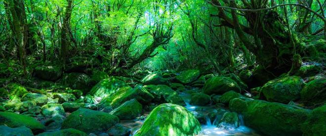 Phát hiện hang động hình trái tim ẩn mình trong khu rừng ngàn năm tuổi - ảnh 3