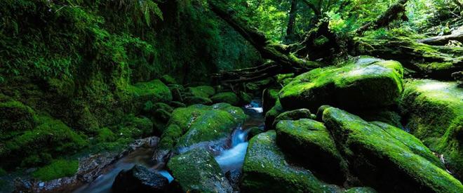 Phát hiện hang động hình trái tim ẩn mình trong khu rừng ngàn năm tuổi - ảnh 4