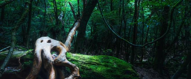 Phát hiện hang động hình trái tim ẩn mình trong khu rừng ngàn năm tuổi - ảnh 7