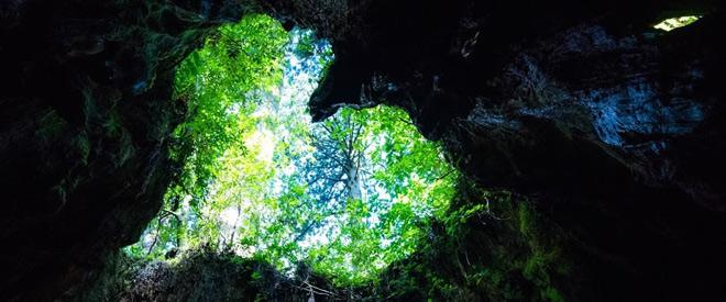 Phát hiện hang động hình trái tim ẩn mình trong khu rừng ngàn năm tuổi - ảnh 10