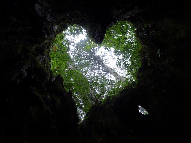 Phát hiện hang động hình trái tim ẩn mình trong khu rừng ngàn năm tuổi - ảnh 11