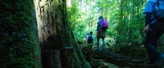 Phát hiện hang động hình trái tim ẩn mình trong khu rừng ngàn năm tuổi - ảnh 14