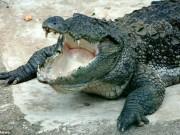 Thế giới - Srilanka: Nhà báo Tây rửa tay bị cá sấu kéo xuống ăn thịt
