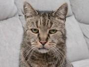 Cụ mèo già nhất thế giới chết ở tuổi  144