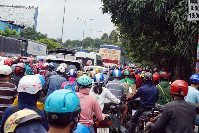 """Xóa sổ """"chợ"""" sinh vật cảnh lớn nhất SG, giao thông tê liệt từ sáng đến trưa - 9"""
