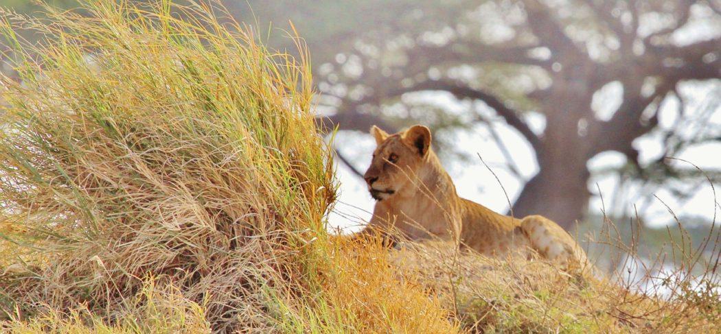 Những quốc gia châu Phi an toàn nhất để vi vu một mình - ảnh 12