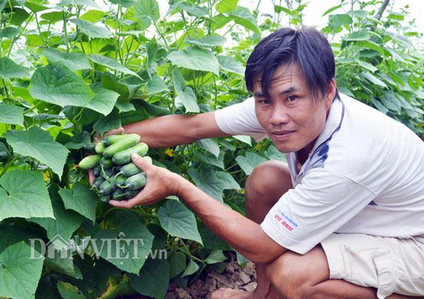 Cách trồng hay: Đất mặn khó nhằn, rau màu vẫn xanh, kiếm nhanh 200 triệu - ảnh 1