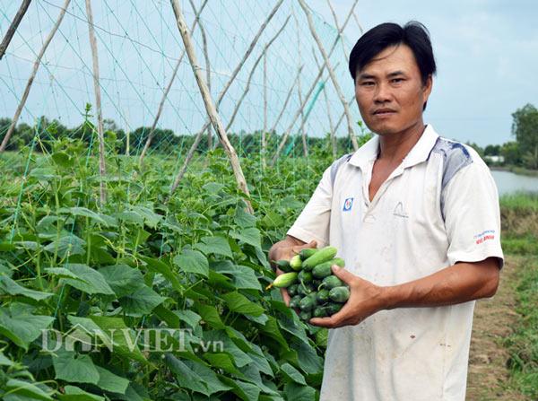 Cách trồng hay: Đất mặn khó nhằn, rau màu vẫn xanh, kiếm nhanh 200 triệu - ảnh 3