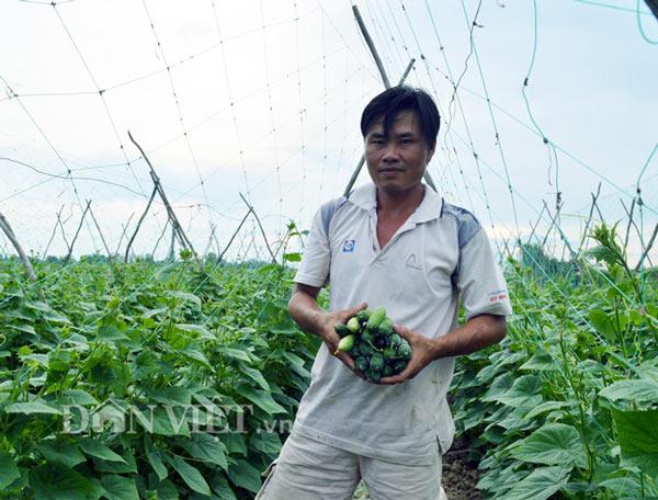 Cách trồng hay: Đất mặn khó nhằn, rau màu vẫn xanh, kiếm nhanh 200 triệu - ảnh 4